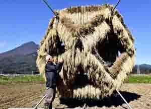 注目!「農業アート」 猪苗代に作品、稲干しには美しさがある