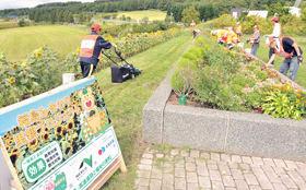 有珠山SAで行われている太陽の園の利用者による花壇整備。植えたヒマワリも今年開花した