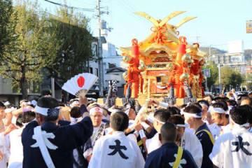 秋晴れの下、黄金の輝きで観衆を魅了した大みこし(京都市北区・大将軍交差点)