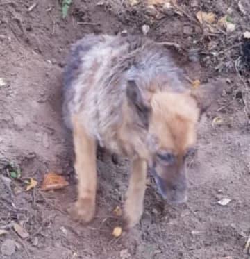 生きたまま埋められた犬。アフチャルコのサイトから