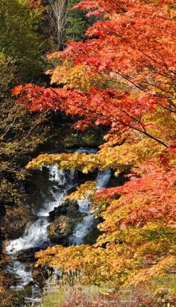 鉱泉に映える紅葉 中之条六合地区のチャツボミゴケ公園で見頃