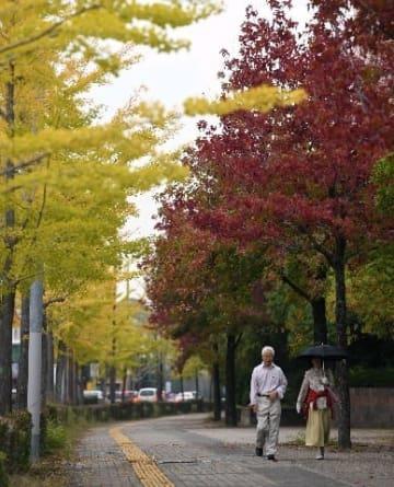 深まる秋、木々は衣替え 二十四節気「霜降」