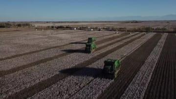 綿花収穫の機械率が急上昇 新疆ウイグル自治区