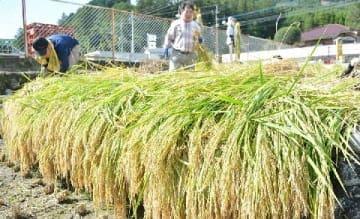 豪雨被災地に実りの秋 日田市小野、大鶴、夜明地区 2年ぶり稲刈り、芋掘りに歓声 [大分県]