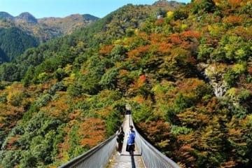 秋が深まり、赤や黄色に染まる梅の木轟公園つり橋付近=24日午前、八代市泉町