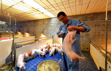 「スマート豚舎」で目指す貧困脱却 河北省磁県