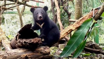 親にはぐれた子熊、健康回復し近く野生へ 台湾花蓮