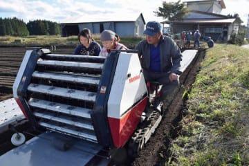 合川さんとともに、ニンニクの植え付け作業を行う中国人技能実習生の張延芳さん(左)と張菁さん(中)=10月中旬、十和田市