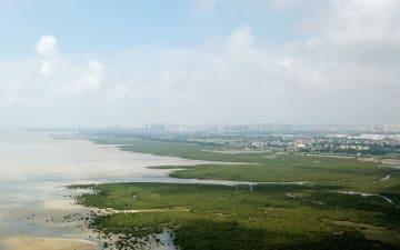 北部湾の生態を守る「海上森林」 広西チワン族自治区