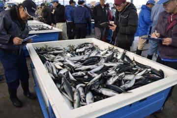 八戸港に水揚げされたサバ=29日、八戸市第1魚市場