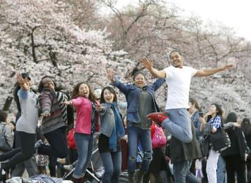2016年、東京・上野公園で日本の「花見」を楽しむ米国からの観光客ら