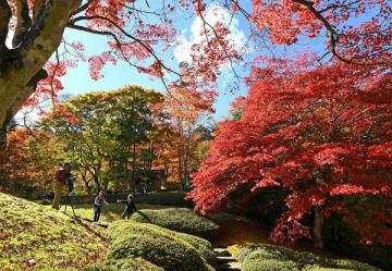 見頃を迎えた古峯園の紅葉=30日午前、鹿沼市草久