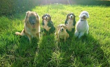 セラピードッグ トレーニング アニマル セラピスト 人と犬との憩いの場所