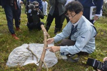被害木に残るマツノマダラカミキリの痕跡について説明する専門家=2日、南部町小向