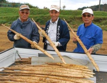 太く真っすぐに育った自然薯を手にする生産者=3日、君津市