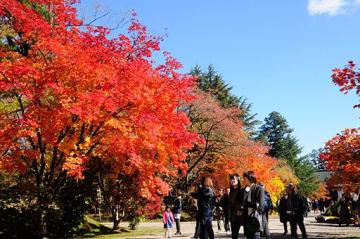 晴れ渡る空の下、弘前公園内の紅葉を楽しみながら散策する人々=3日午前、三の丸ピクニック広場近く