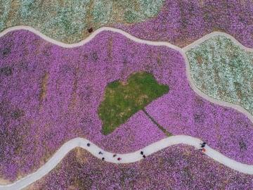 「花の海」を散策 浙江省長興県