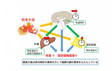 研究の概要。(画像:名古屋大学発表資料より)