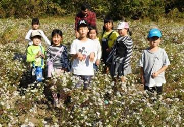カワラノギクを保全している相模原市立湘南小学校の児童