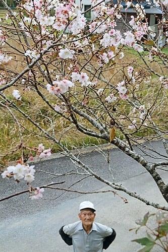 【薄いピンク色の花を咲かせているシキザクラ】