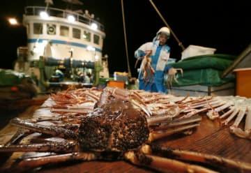 漁が解禁され、漁船に引き上げられたズワイガニ=11月6日未明、兵庫県豊岡市沖