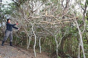 【自然の木を使って船の形をした作品を制作している大矢りかさん(5日、和歌山県串本町潮岬で)】
