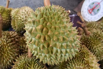 (Credit) Durian