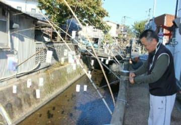 竹灯籠の準備を進める住民=日田市中城町