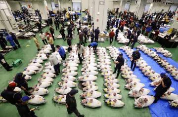 開場した豊洲市場で、競りを前に並べられたマグロ=10月、東京都江東区