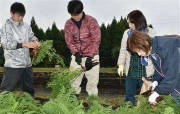 東海大阿蘇キャンパスの実習農場でニンジンを収穫する学生と地元の黒川地区の住民=南阿蘇村