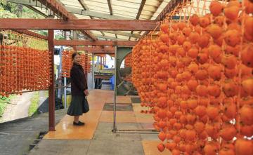 農家の軒先に玉すだれ状につるされた串柿=10日、和歌山県かつらぎ町