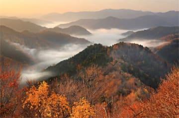 木々が色づく中、早朝の谷間に出現した雲海(11日午前6時58分、滋賀県高島市朽木小入谷)