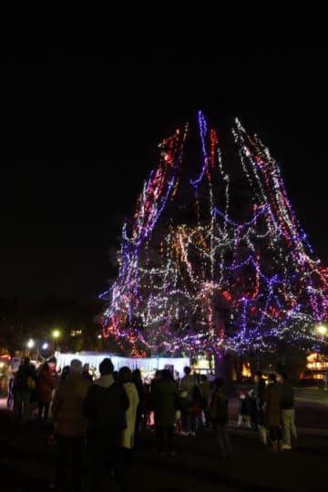 今年はイルミネーションがパワーアップ!!たまプラーザ「美しが丘公園」に巨大ペアツリー登場