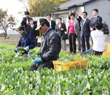 技能実習生が働くホウレンソウ畑を視察する、立憲民主党のPTメンバーら=12日午後1時55分ごろ、太田市大原町