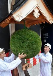 新酒シーズンの到来を知らせる「酒林」=姫路市林田町六九谷