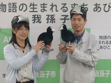 鳥の博物館学芸員が監修した我孫子市の鳥「オオバン」のぬいぐるみ