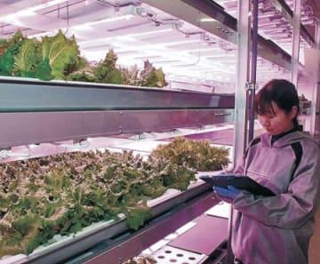 三協立山、送風改善で新技術 植物工場、特許出願