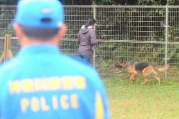 審査会に登場したシェパード=横浜市栄区の県警直轄警察犬訓練所