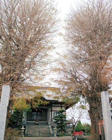 塩害で色づかぬ木々 なお残る台風の爪痕