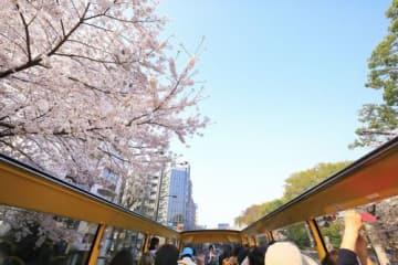 オープントップバス「オーソラミオ」の都内ツアー(はとバス提供)