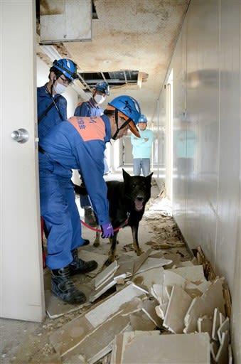 行方不明者の捜索訓練で、がれきの中を調べる災害救助犬や指導士ら=八代市