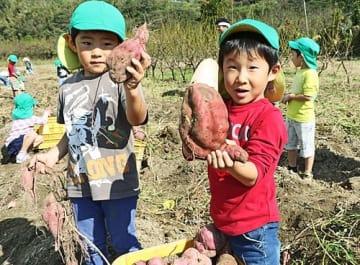 【大きなサツマイモを掘り出し、喜ぶ園児(和歌山県みなべ町西本庄で)】