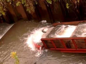 設置された魚道を上るビワマス(9日、野洲市冨波甲の中ノ池川)=提供