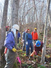 広葉樹をノコギリで間伐する参加者たち