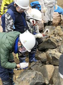 発掘体験で化石を探す丹波市の児童たち