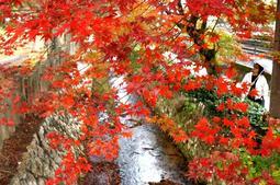 秋の時雨が紅葉をぬらし、城下町をたおやかに彩る=14日午後、朝来市和田山町竹田