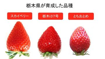 県産主力品種の比較(県提供)