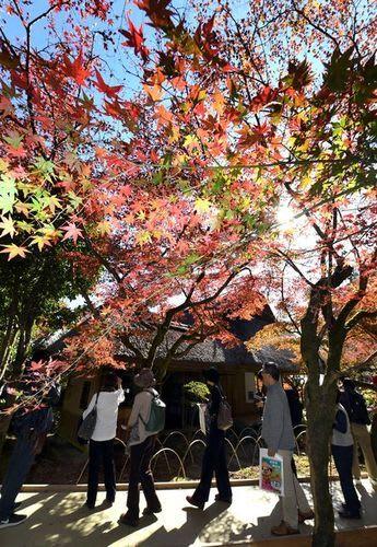 モミジが色づき、公開初日から大勢の来場者が訪れた九年庵=15日、佐賀県神埼市