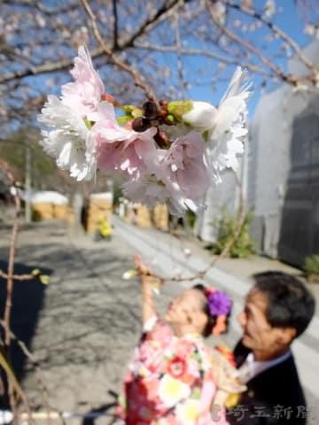 冬桜を楽しむ七五三の家族連れ=15日午後、埼玉県熊谷市妻沼の妻沼聖天山