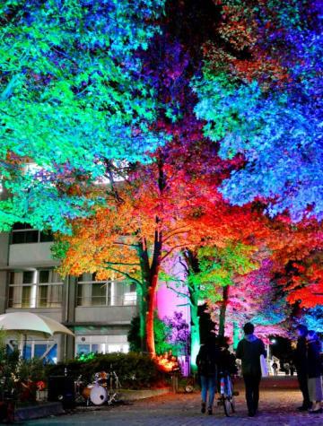 色とりどりにライトアップされた愛媛大の「メイプルプロムナード」=15日夜、松山市文京町